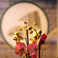 цветочная планета :: Олег Лукьянов