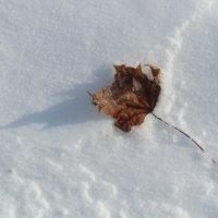 на снегу :: tgtyjdrf