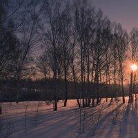 Утром в лесу. :: cfysx