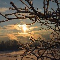 Зимняя красота :: Екатерина