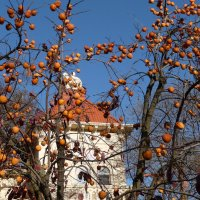 Хурма глубокой осенью. :: Alexey YakovLev