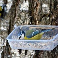 в очередь! :: linnud