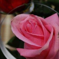 роза :: Марина Легкая