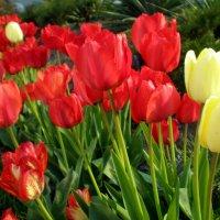 Вот и весна пришла :: Татьяна Пальчикова