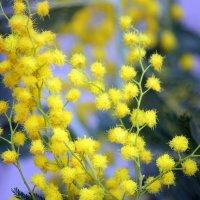 С праздником женским, весенним и радостным!!! :: оля san-alondra