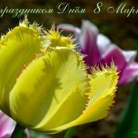 С праздником дорогие женщины! :: Николай Ярёменко