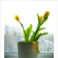 Немного тепла на холодном окне... :: алексей афанасьев