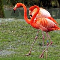 По зоопарку гуляют постепенно :: Alexander Andronik
