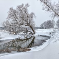 Дерево :: Николай Андреев