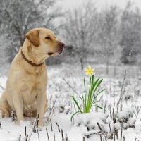 Весна идет, весне дорогу! :: Алексей Яковлев