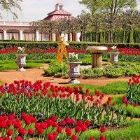 Какие тюльпаны!!! :: Vladimir Smirnov