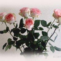 Всех женщин поздравляю с праздником!!! :: Тамара (st.tamara)