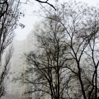 Туманно... 8 марта :: Александр Скамо