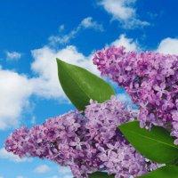 Сиреневое лето :: Любовь Можар