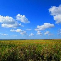Летний пейзаж. :: Татьяна ❧