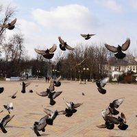 Голуби :: Владимир Болдырев