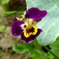 дачные цветы 1 :: Александр Прокудин