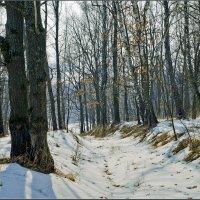 Лес в марте :: Александр Лихачёв