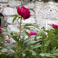 Соловки, уголок ботанического сада :: Тимофей Черепанов