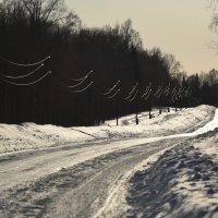 Лесная дорога в контровом свете :: Нина Штейнбреннер