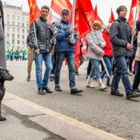 Каштанка на параде. :: OKCAHA Валова