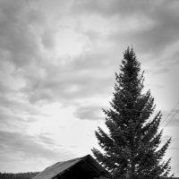 Заброшенная деревня :: Елена Дорогина