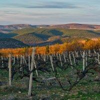 Вечером у виноградника :: Игорь Кузьмин
