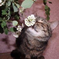 запахло весной :: Ольга Монастырёва