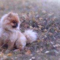 Буба и Осень.... :: leonid