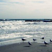 Море и птицы :: Людмила