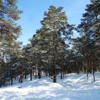 Зимний лес :: Александр Подгорный