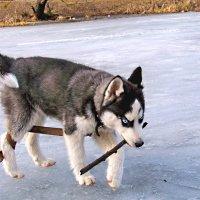 Прогулка по весеннему льду :: Алексей Ник