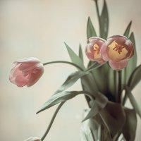 Тюльпаны на окне :: Людмила Лебедева