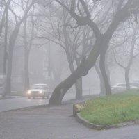 Туманно :: Александр Скамо