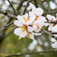 весна :: Светлана Деева