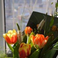 Тюльпан – символ нежности и красоты. :: Anna Gornostayeva