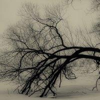 Дерево :: Вячеслав Аржанухин