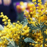 Цветы :: Виктория Владимировна