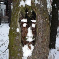 зимняя рожица :: Александр Прокудин