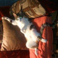 Кошки :: Елена А