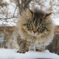 ПИРАТ  идёт по  свежему  Снегу ... :: JT --------      SHULGA  Alexei