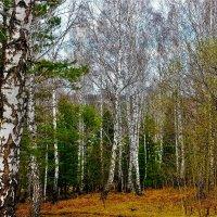 Весна :: Сергей Чиняев