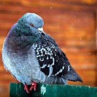 Bird Of Peace :: Евгений Балакин