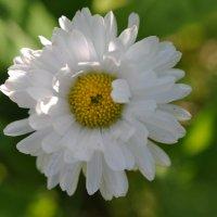 Еще один цветок :: Наталья Крылова