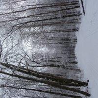 лыжня зовёт... :: НАДЕЖДА КЛАДЧИХИНА