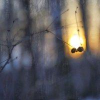 Закаты :: Svetlana Sneg