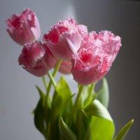 Тюльпаны :: Инна Кравченко