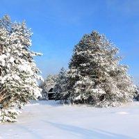 Снежный январь. :: Hаталья Беклова