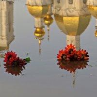 цветы в луже :: НАТАЛЬЯ