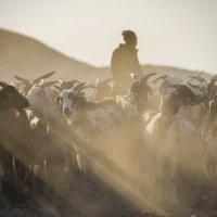 Пастырь :: Андрей Артамонов (artamonoff2009)